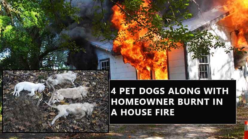 Home Fire Kills 4 Pet Dogs