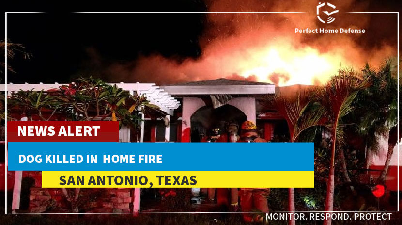 Dog Killed in San Antonio Home Fire
