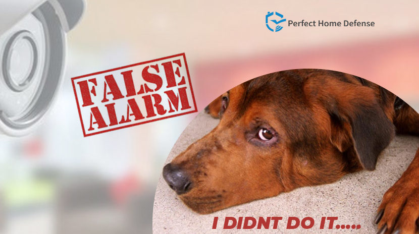 Pet Friendly Home Security System To Prevent A False Alarm